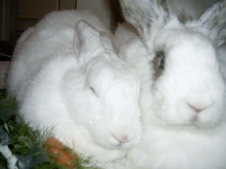funny bunny. FUNNY BUNNY TOY COMPANY